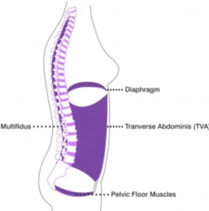 core muscle